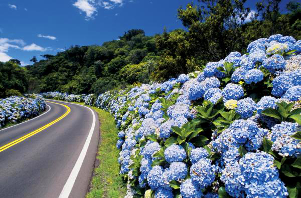 Estrada_gramado